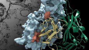 Mikoplazma Enfeksiyonu Nedir, Nasıl Anlaşılır?